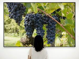 Druiven in Toscane Natuur Poster - Natuur Wanddecoratie