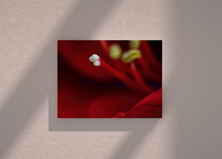 Bloemen Wanddecoratie - amaryllis