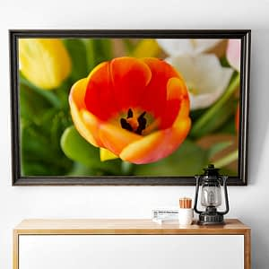 Oranje Tulp Close Up Poster - Bloemen Wanddecoratie