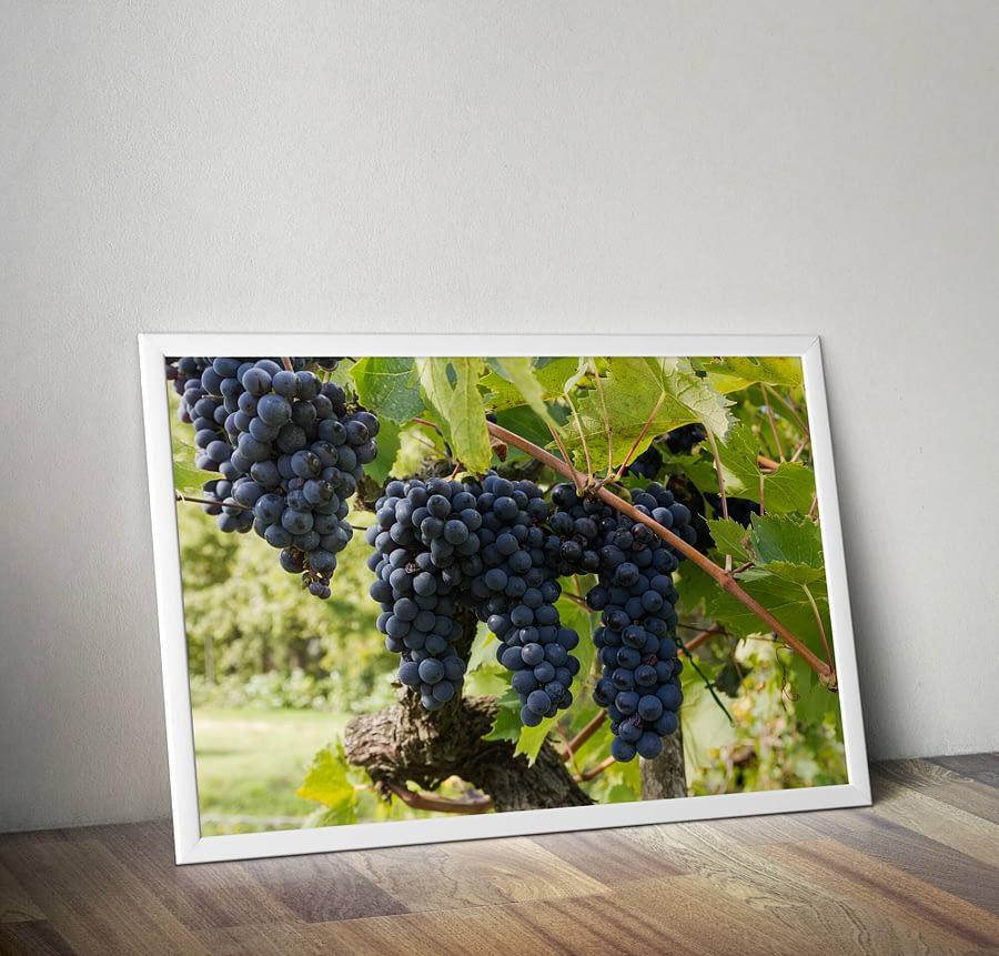 Druiven in Toscane Poster - Natuurfotografie Wanddecoratie