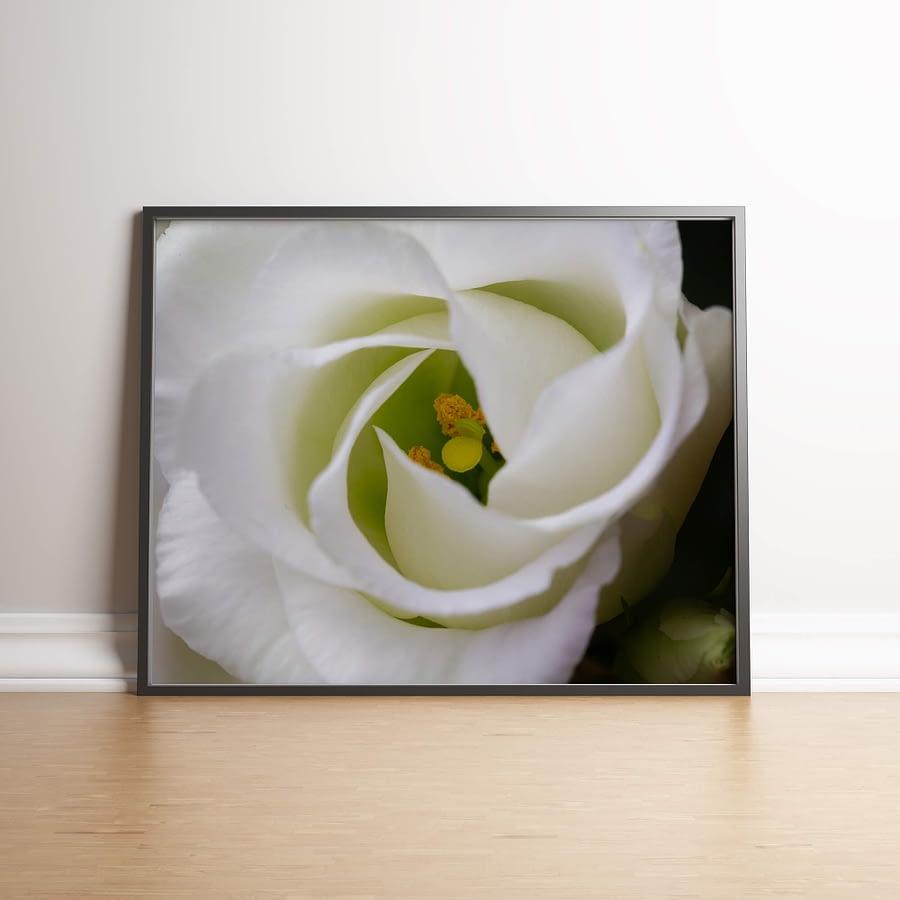 Natuur poster en print - witte eustoma - Lisianthus