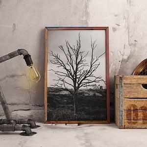 Lonely Tree - Zwart-Wit Natuur Poster en Canvas Print