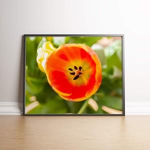 Oranje tulp met closeup van stamper poster