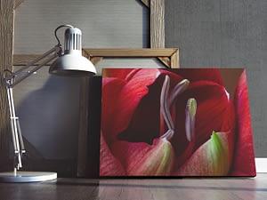 Ontluikende Amaryllis - Natuurfotografie