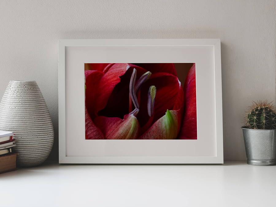 Amaryllis in de knop - natuur wanddecoratie