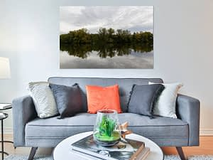 Trees Reflection - Natuur Poster en Print