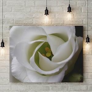 Hart van witte bloem - natuurfotografie poster en print
