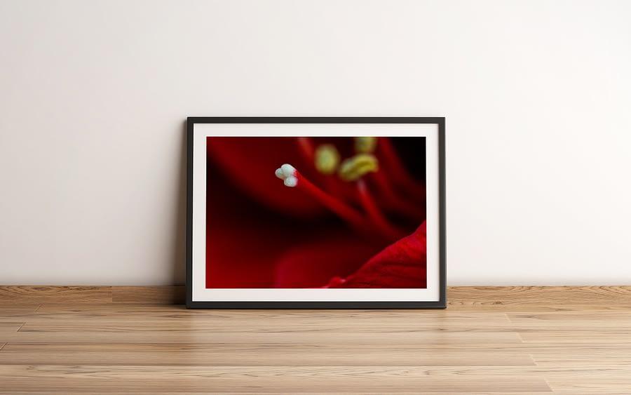 stamper van een rode amaryllis - Bloemen Wanddecoratie