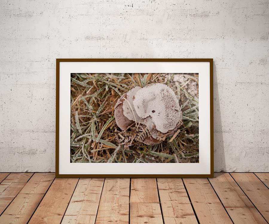 Frosty Autumn Poster - Natuur Wanddecoratie