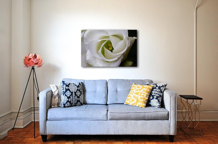 Eustoma bloem natuur poster en canvas print