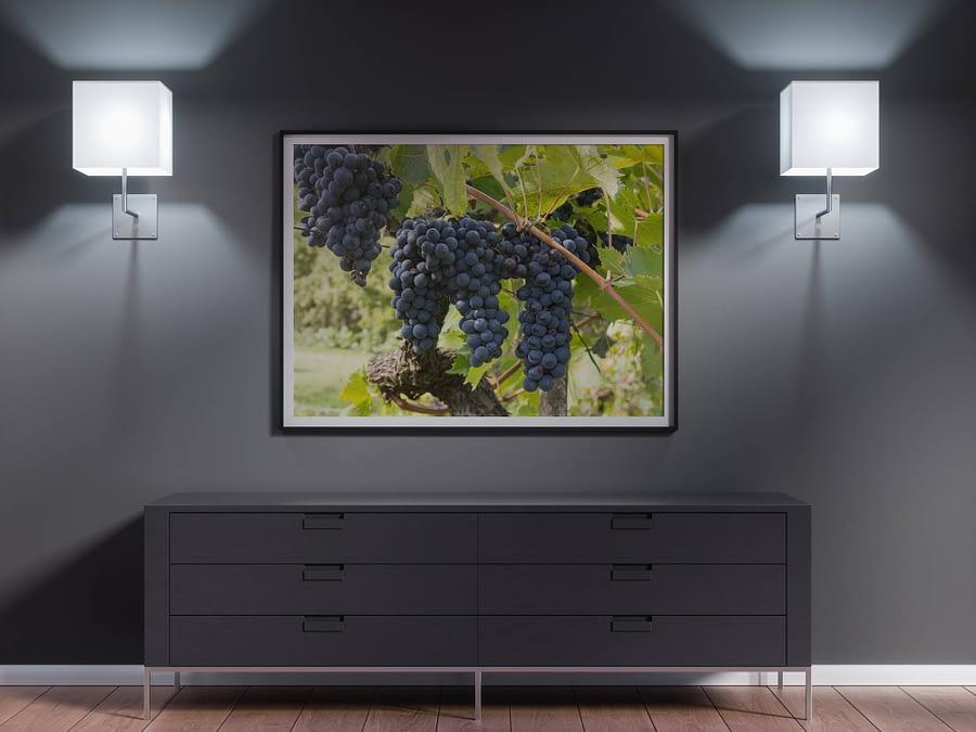 Druiven in Toscane Poster